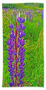 Purple Lupine On Campobello Island-nb Beach Towel