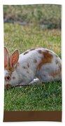 Rabbit Beach Towel