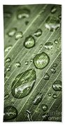 Raindrops On Green Leaf Beach Towel by Elena Elisseeva