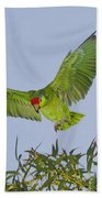 Red-crowned Parrot Beach Towel