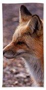 Red Fox In Prospect Park Beach Towel