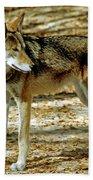 Red Wolf Beach Towel