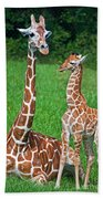 Reticulated Giraffe Calf With Mother Beach Towel