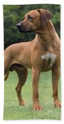 Rhodesian Ridgeback Dog Beach Towel