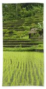 Rice Fields In Bali Indonesia Beach Towel
