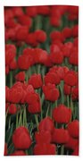 Rows Of Red Tulips With One Yellow Tulip Beach Towel by Jim Corwin