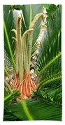 Sago Palm Beach Towel
