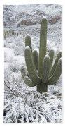 Saguaro Cactus After Rare Desert Beach Sheet