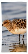 Sanderling Beach Towel