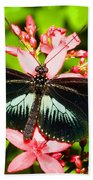 Sapho Longwing Butterfly Beach Towel