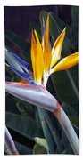 Seaport Bird Of Paradise Beach Towel