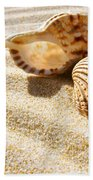 Seashell And Conch Beach Towel by Carlos Caetano