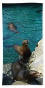 Seaworld Sea Lions Beach Towel