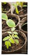 Seedlings Growing In Peat Moss Pots Beach Towel
