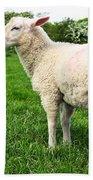 Sheep In Field Beach Towel