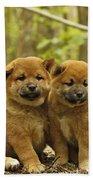 Shiba Inu Puppies Beach Towel
