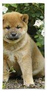 Shiba Inu Puppy Dog Beach Towel