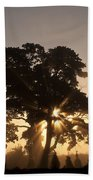 Silhouetted Tree With Sun Rays Beach Towel