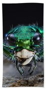Six-spotted Green Tiger Beetle Beach Towel