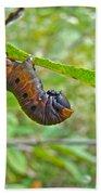 Snowberry Clearwing Hawk Moth Caterpillar - Hemaris Diffinis Beach Sheet