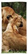 Sociable Lions   Beach Towel