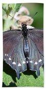 Spicebush Swallowtail Papilio Troilus Beach Towel