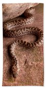 Spotted Python Antaresia Maculosa Beach Towel