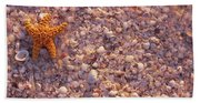 Starfish On The Beach, Lovers Key State Beach Sheet
