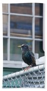 Starling Beach Towel