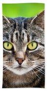 Stray Cat Stare Beach Sheet
