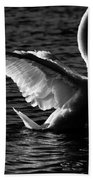 Swan Wingspan Beach Towel