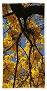 Tabebuia Tree Blossoms Beach Towel