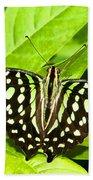 Tailed Jay Butterfly Beach Towel