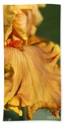 Tall Bearded Iris Named Penny Lane Beach Towel