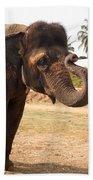 Temple Elephants Maharaja's Palace India Mysore Beach Towel