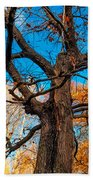 Texture Of The Bark. Old Oak Tree Beach Towel