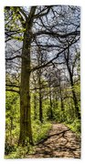 The Forest Path Beach Towel by David Pyatt