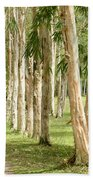 The Path Between The Trees Beach Towel
