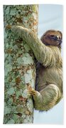 Three-toed Sloth Bradypus Tridactylus Beach Towel