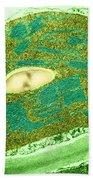 Tomato Chloroplast, Tem Beach Towel