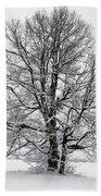 Trees In Winter Beach Towel