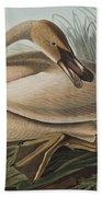 Trumpeter Swan Beach Towel by John James Audubon