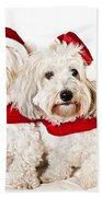 Two Cute Dogs In Santa Outfits Beach Sheet