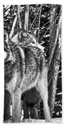 Two Gray Wolves Beach Towel