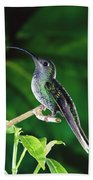 Violet Sabre-wing Hummingbird Beach Towel by Michael and Patricia Fogden