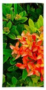 West Indian Jasmine In Sukhothai Historical Park-thailand Beach Towel