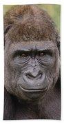 Western Lowland Gorilla Young Male Beach Towel
