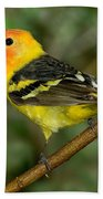 Western Tanager Beach Towel