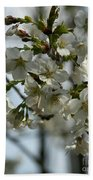 White Cherry Blossoms Beach Towel