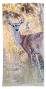 White Tail Deer Bambi In The Wild Beach Towel